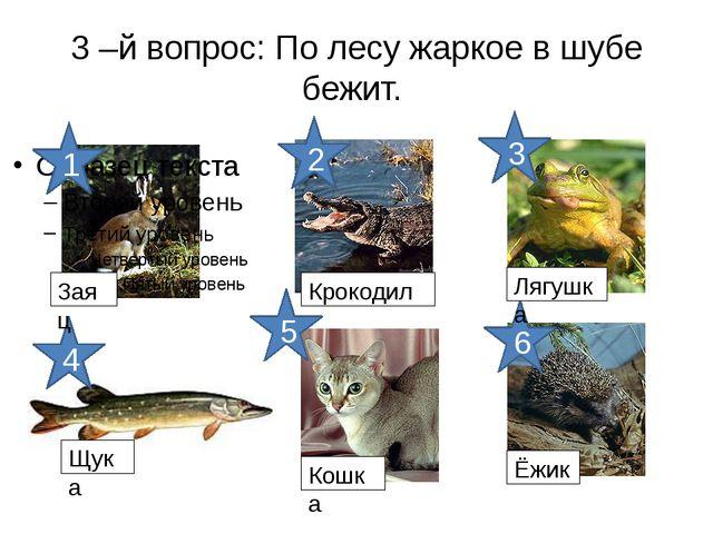 3 –й вопрос: По лесу жаркое в шубе бежит. 6 5 4 3 2 1 Заяц Крокодил Лягушка Щ...
