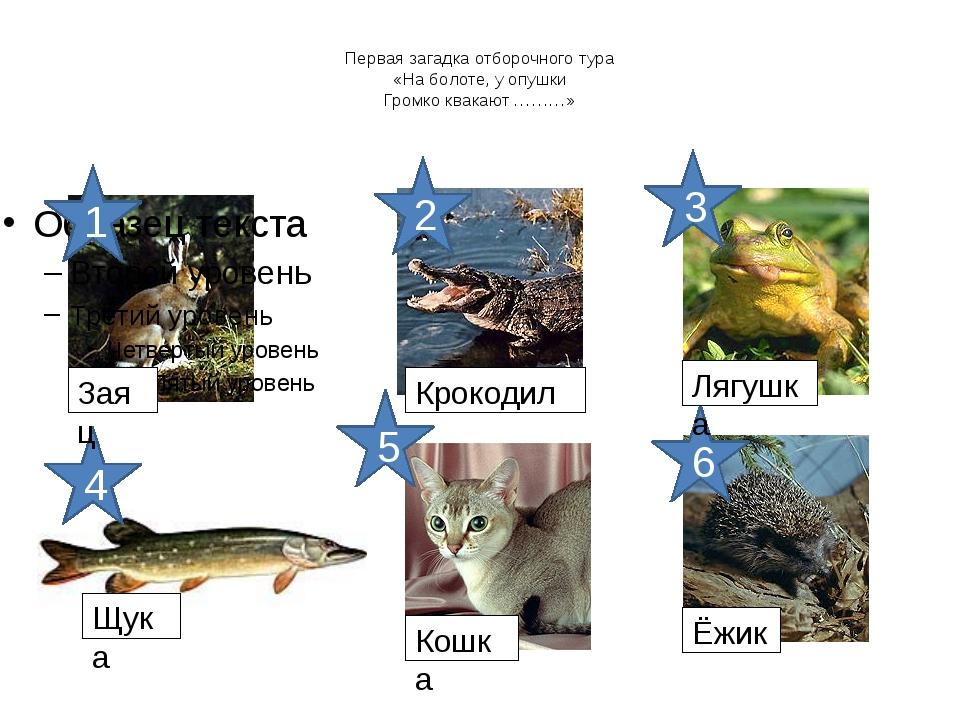 Первая загадка отборочного тура «На болоте, у опушки Громко квакают ………» 1 2...