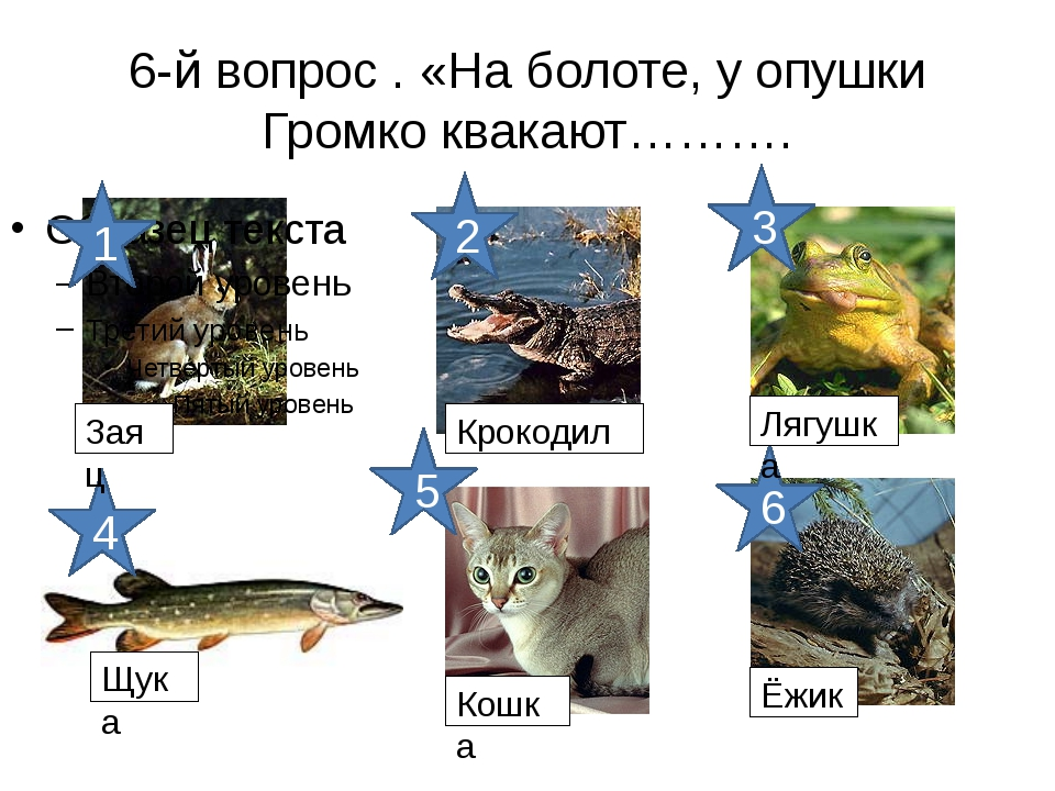 6-й вопрос . «На болоте, у опушки Громко квакают………. 6 5 4 3 2 1 Заяц Крокоди...
