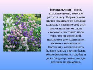 Колокольчики – очень красивые цветы, которые растут в лесу. Форма самого цвет