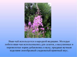Иван-чай используется в народной медицине. Молодые побеги иван-чая использова