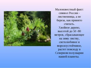 Малоизвестный факт: символ России - лиственница, а не береза, как принято счи