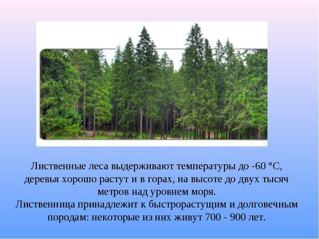 Лиственные леса выдерживают температуры до -60 °C, деревья хорошо растут и в...