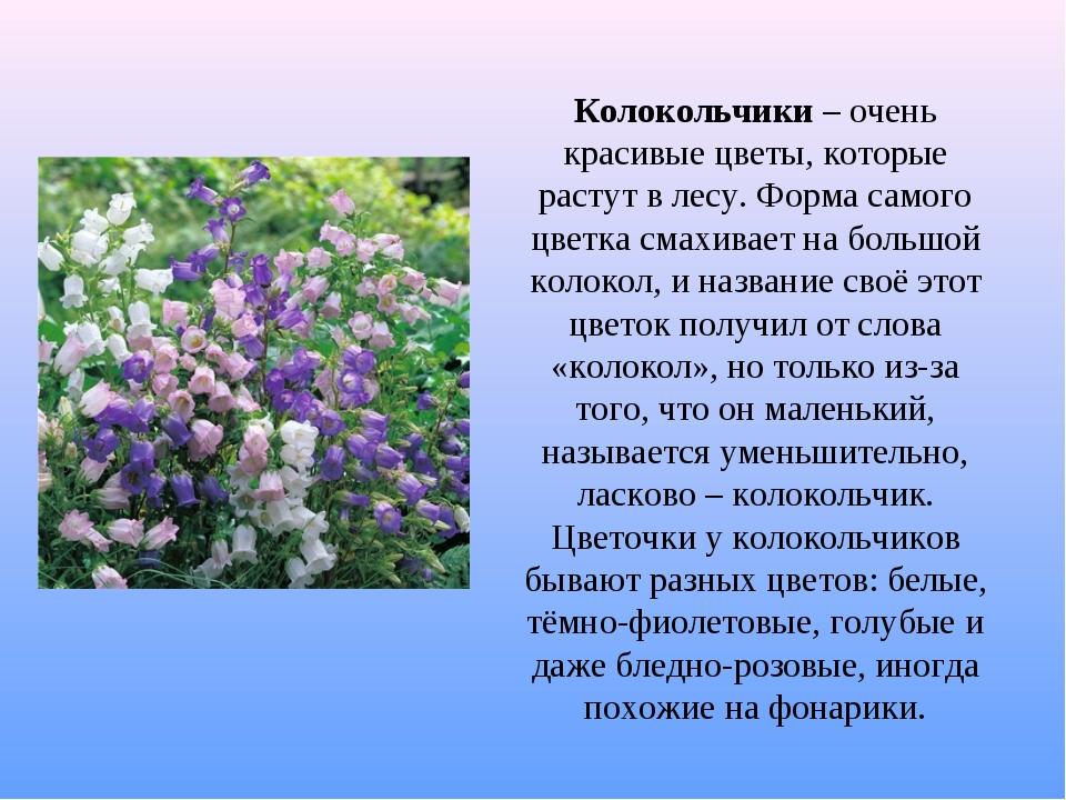 Колокольчики – очень красивые цветы, которые растут в лесу. Форма самого цвет...
