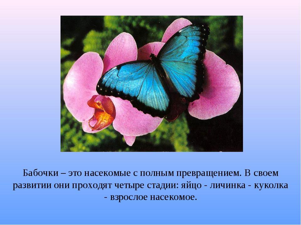 Бабочки – это насекомые с полным превращением. В своем развитии они проходят...