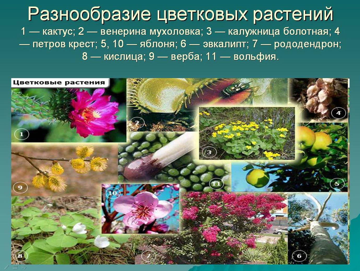 hello_html_20100453.jpg