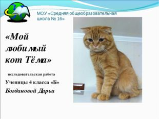 МОУ «Средняя общеобразовательная школа № 16» «Мой любимый кот Тёма» исследова