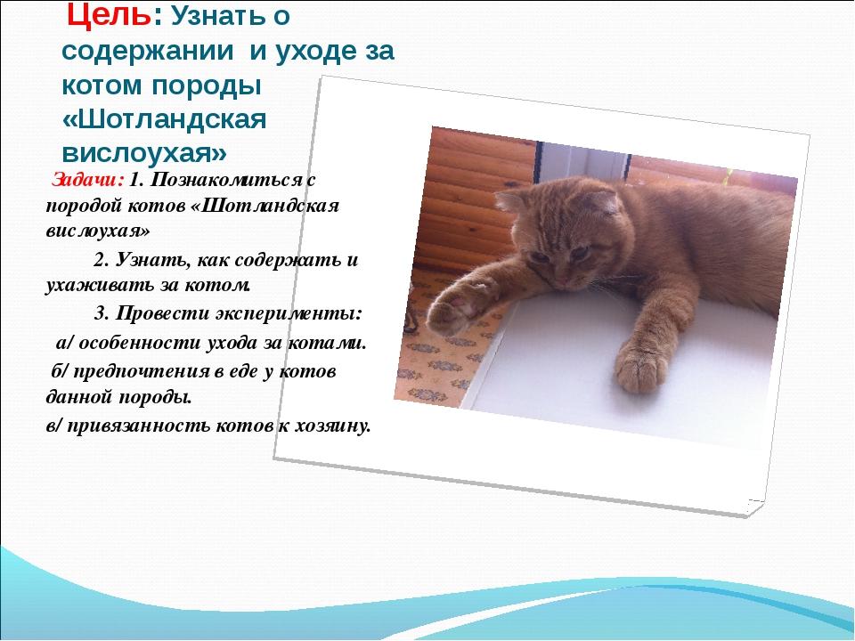 Цель: Узнать о содержании и уходе за котом породы «Шотландская вислоухая» За...
