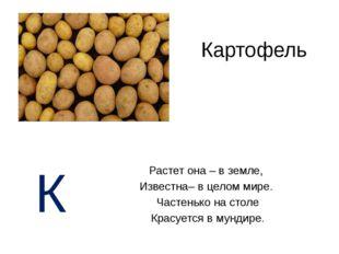 Картофель Растет она – в земле, Известна– в целом мире. Частенько на столе Кр