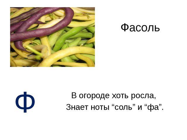 """Фасоль В огороде хоть росла, Знает ноты """"соль"""" и """"фа"""". Ф"""