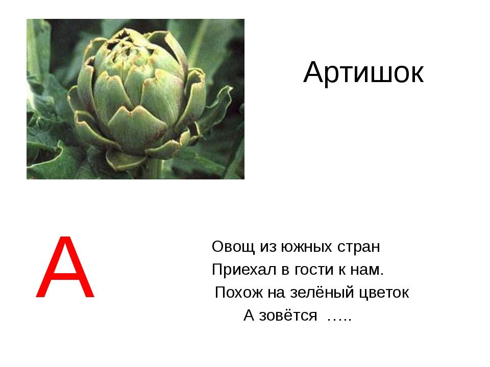 Артишок Овощ из южных стран Приехал в гости к нам. Похож на зелёный цветок А...