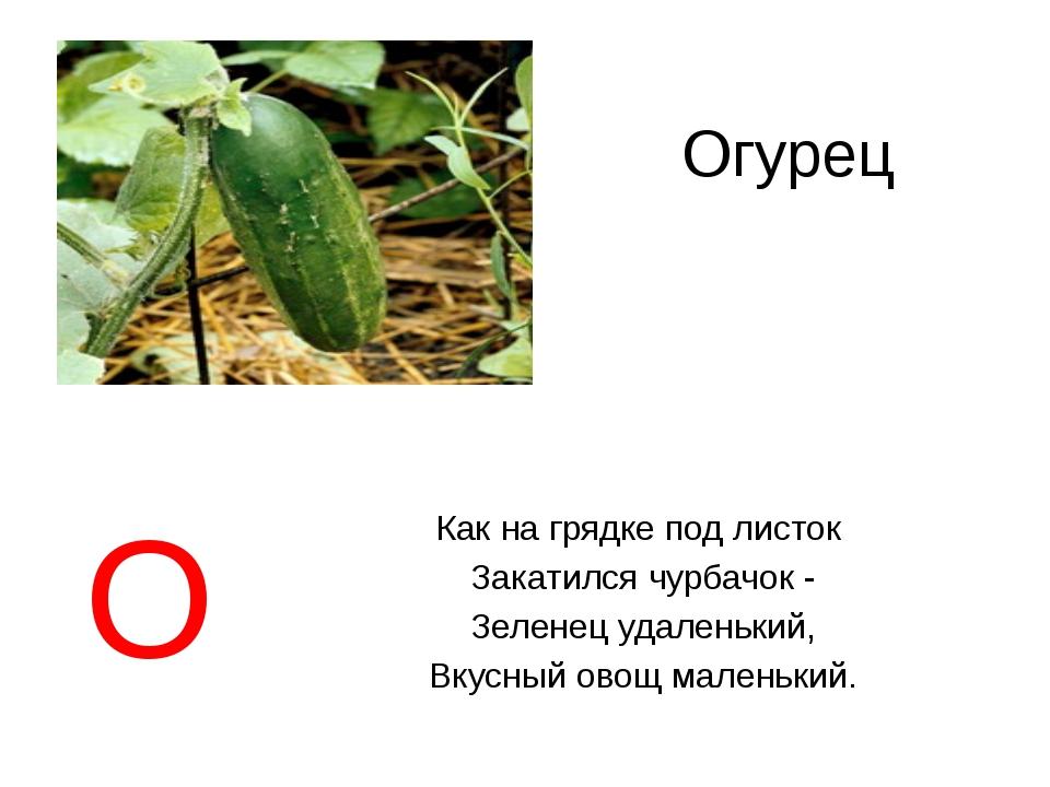 Огурец Как на грядке под листок Закатился чурбачок - Зеленец удаленький, Вкус...
