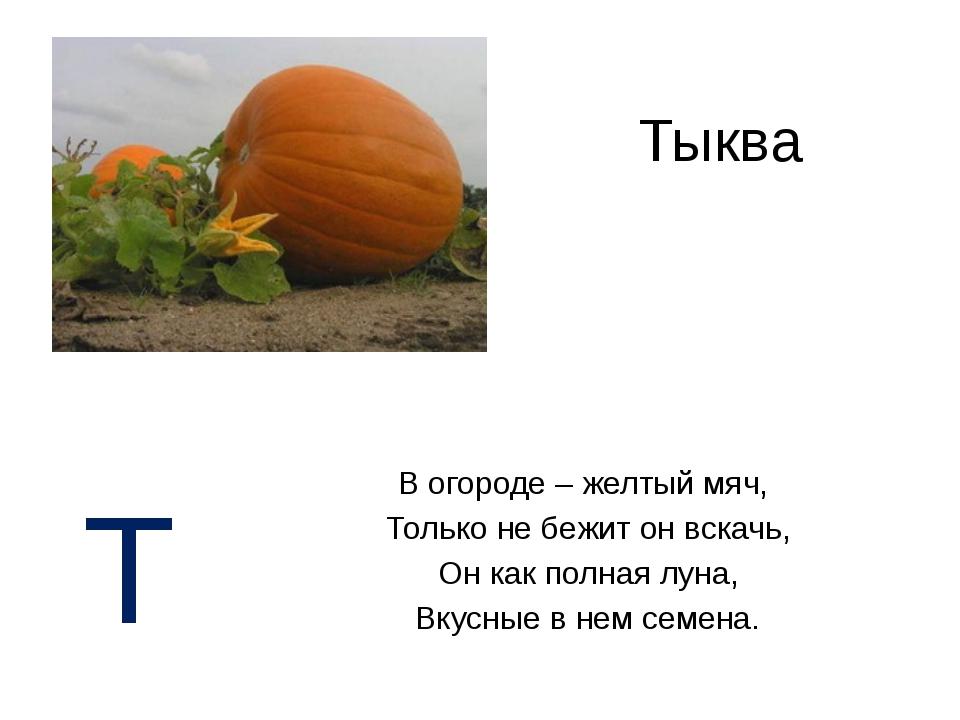 Тыква В огороде – желтый мяч, Только не бежит он вскачь, Он как полная луна,...