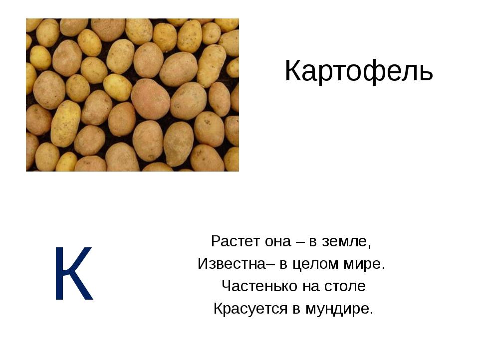 Картофель Растет она – в земле, Известна– в целом мире. Частенько на столе Кр...