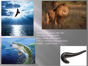 Держали как равных при себе Льва для езды верховой, Щуку, чтобы рыбу ловить,