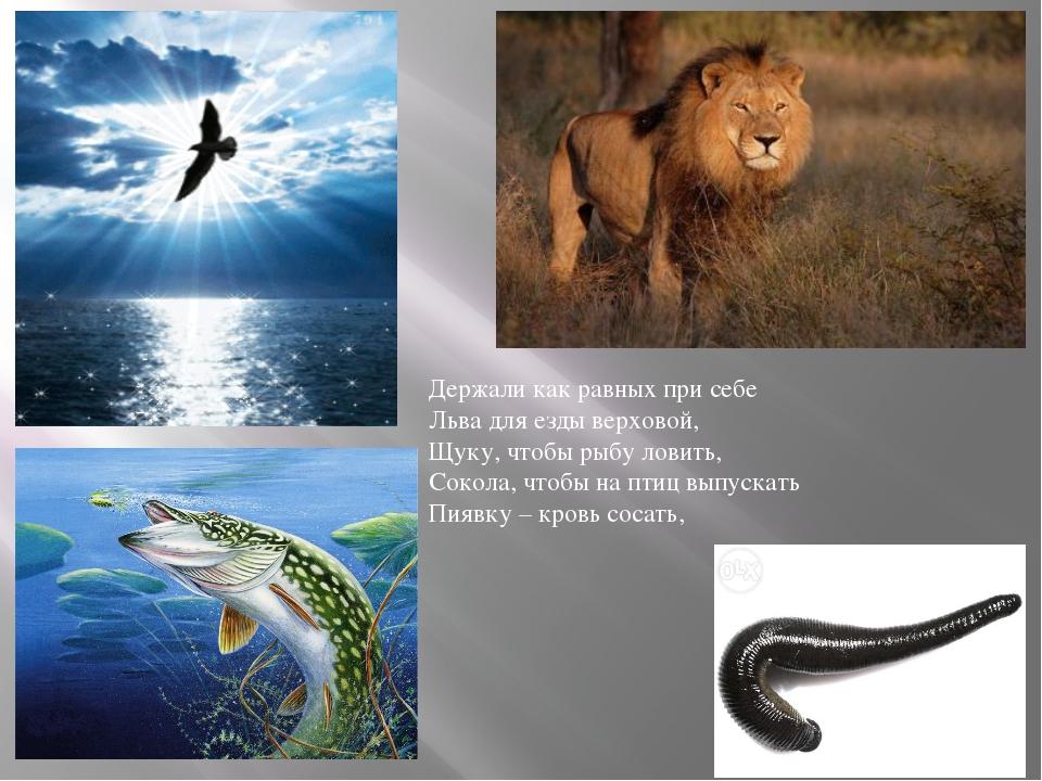 Держали как равных при себе Льва для езды верховой, Щуку, чтобы рыбу ловить,...