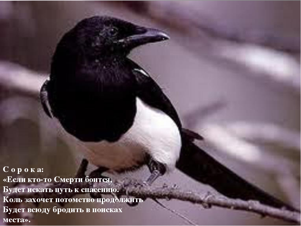 С о р о к а: «Если кто-то Смерти боится, Будет искать путь к спасению. Коль з...