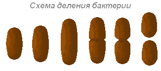 http://biouroki.ru/content/page/685/15.png