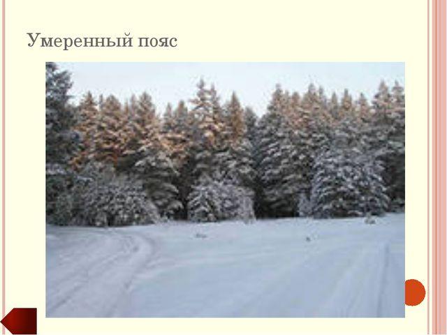 Климатические пояса Основные КП Переходные КП Господствует одна воздушная мас...