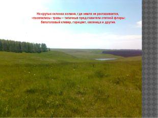 На крутых склонах холмов, где земля не распахивается, «поселились» травы – т