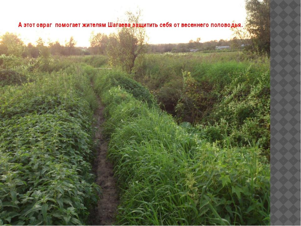 А этот овраг помогает жителям Шагаева защитить себя от весеннего половодья.
