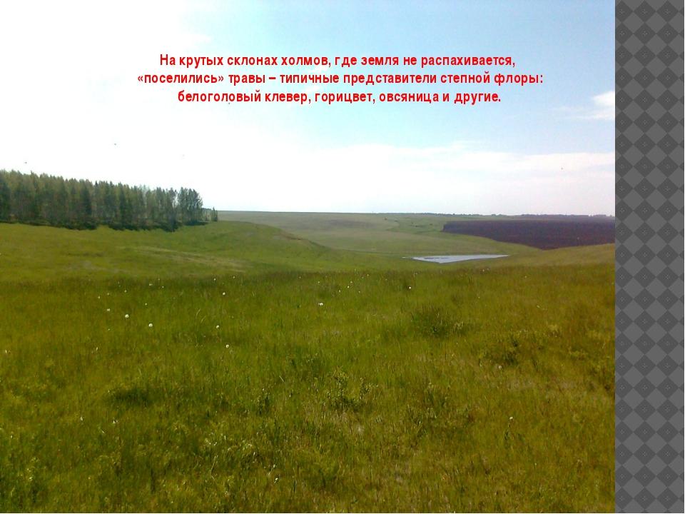 На крутых склонах холмов, где земля не распахивается, «поселились» травы – т...