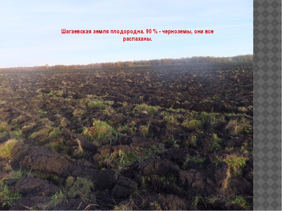 Шагаевская земля плодородна. 90 % - черноземы, они все распаханы.