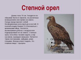 Степной орел Длина тела 70 см. Гнездится по обрывам балок и оврагов, на разли