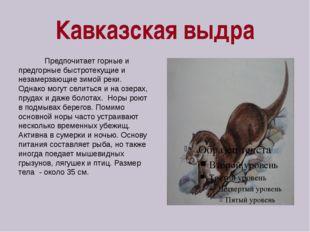 Кавказская выдра Предпочитает горные и предгорные быстротекущие и незамерзающ