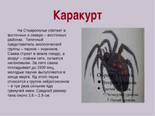 Каракурт На Ставрополье обитает в восточных и северо – восточных районах. Тип
