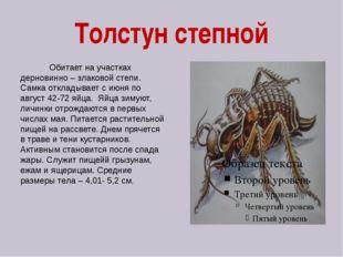 Толстун степной Обитает на участках дерновинно – злаковой степи. Самка отклад