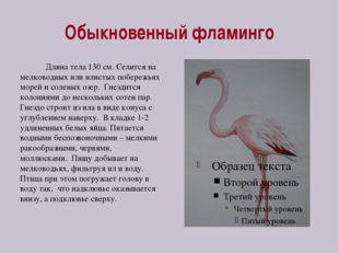 Обыкновенный фламинго Длина тела 130 см. Селится на мелководных или илистых п