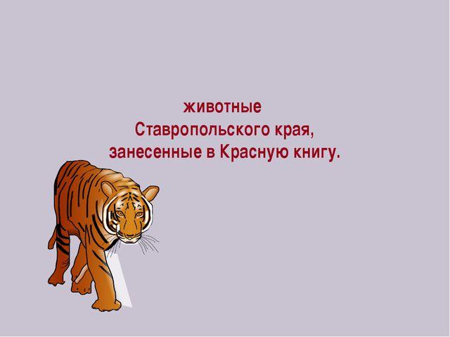 животные Ставропольского края, занесенные в Красную книгу.
