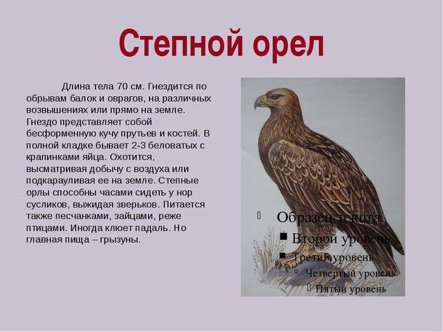 Степной орел Длина тела 70 см. Гнездится по обрывам балок и оврагов, на разли...
