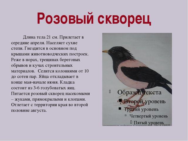 Розовый скворец Длина тела 21 см. Прилетает в середине апреля. Населяет сухие...