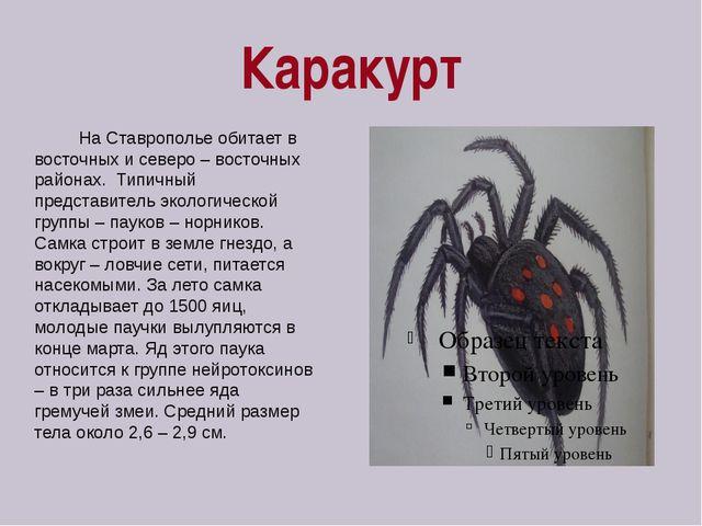 Каракурт На Ставрополье обитает в восточных и северо – восточных районах. Тип...