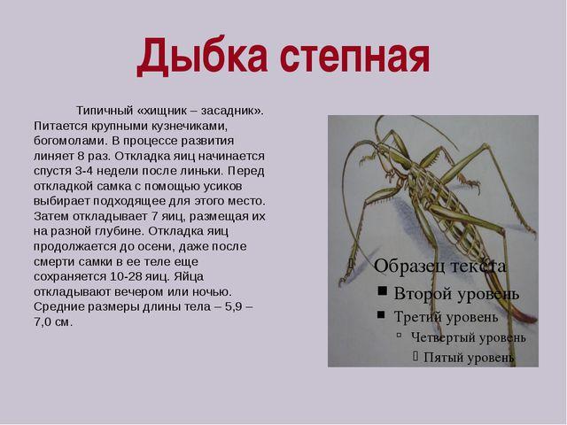 Дыбка степная Типичный «хищник – засадник». Питается крупными кузнечиками, бо...