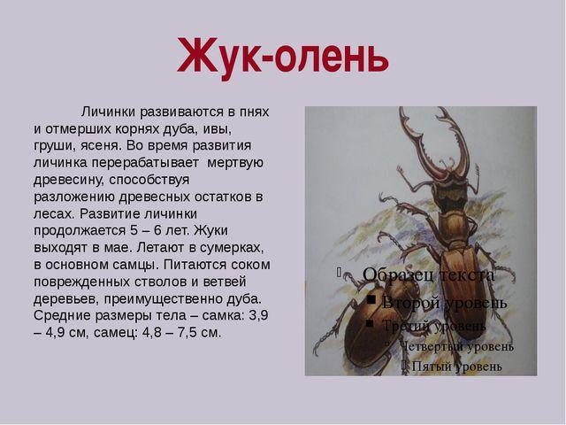 Жук-олень Личинки развиваются в пнях и отмерших корнях дуба, ивы, груши, ясен...