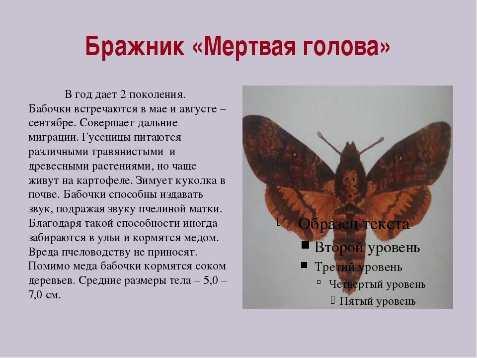 Бражник «Мертвая голова» В год дает 2 поколения. Бабочки встречаются в мае и...