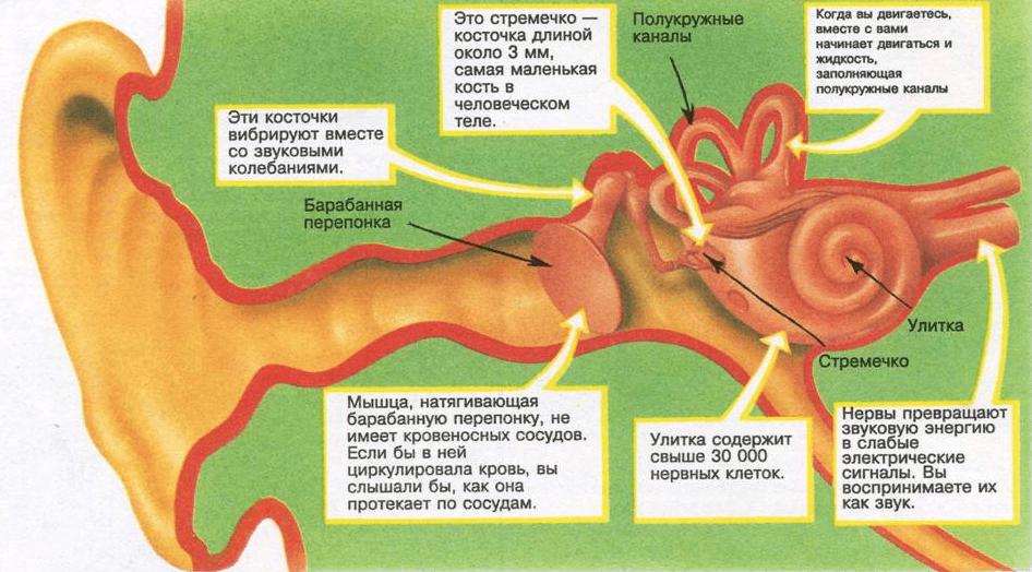http://medlor.ru/wp-content/uploads/2014/11/vnutri.png