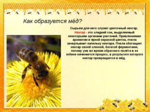 Как образуется мёд? Сырьем для него служит цветочный нектар. Нектар - это сла
