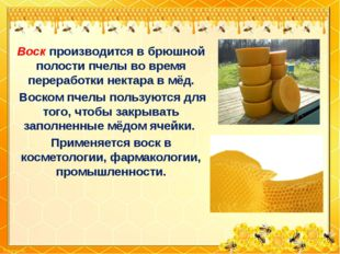 Воск производится в брюшной полости пчелы во время переработки нектара в мёд.