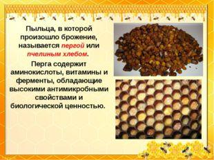 Пыльца, в которой произошло брожение, называется пергой или пчелиным хлебом.