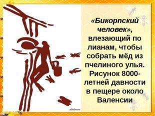 «Бикорпский человек», влезающий по лианам, чтобы собрать мёд из пчелиного уль
