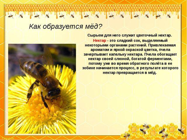 Как образуется мёд? Сырьем для него служит цветочный нектар. Нектар - это сла...