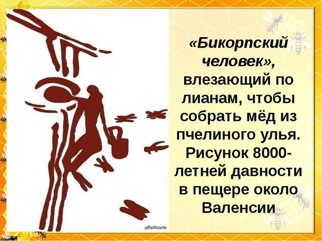 «Бикорпский человек», влезающий по лианам, чтобы собрать мёд из пчелиного уль...