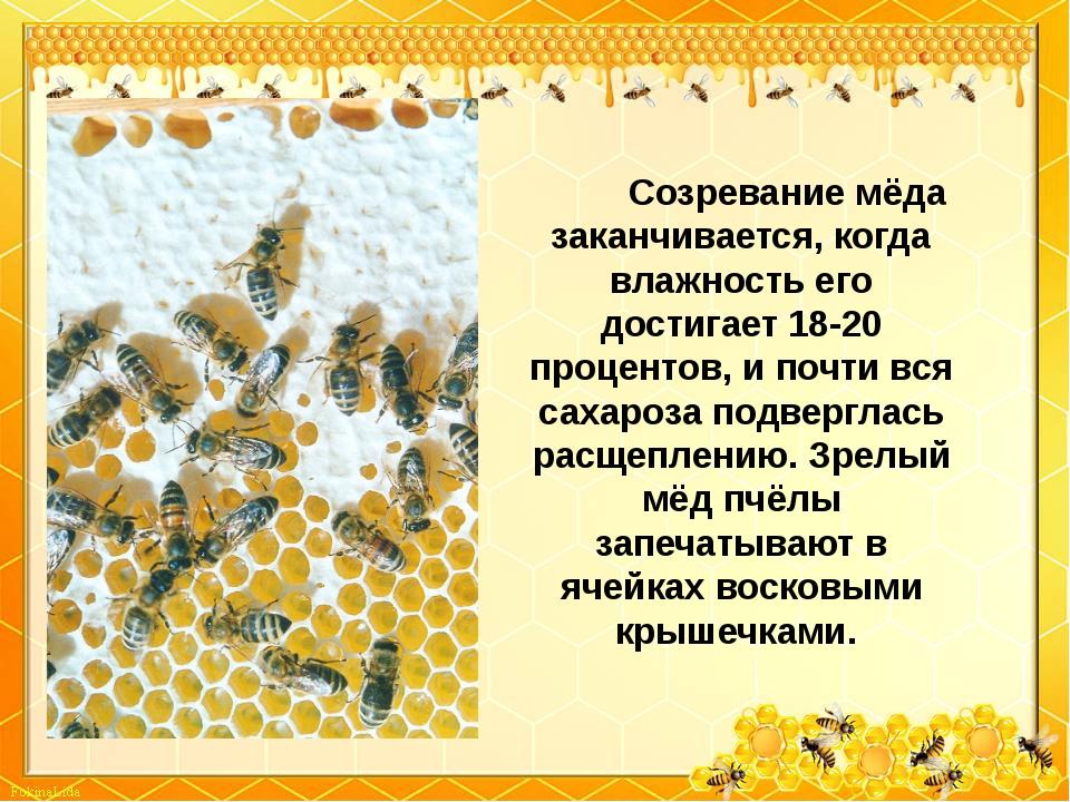Созревание мёда заканчивается, когда влажность его достигает 18-20 п...