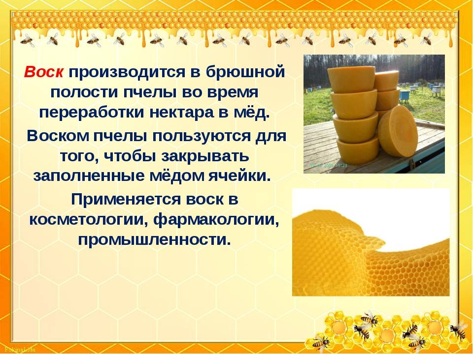 Воск производится в брюшной полости пчелы во время переработки нектара в мёд....