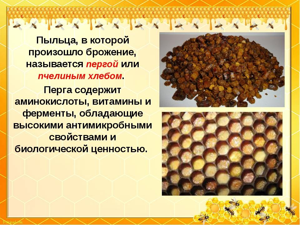 Пыльца, в которой произошло брожение, называется пергой или пчелиным хлебом....