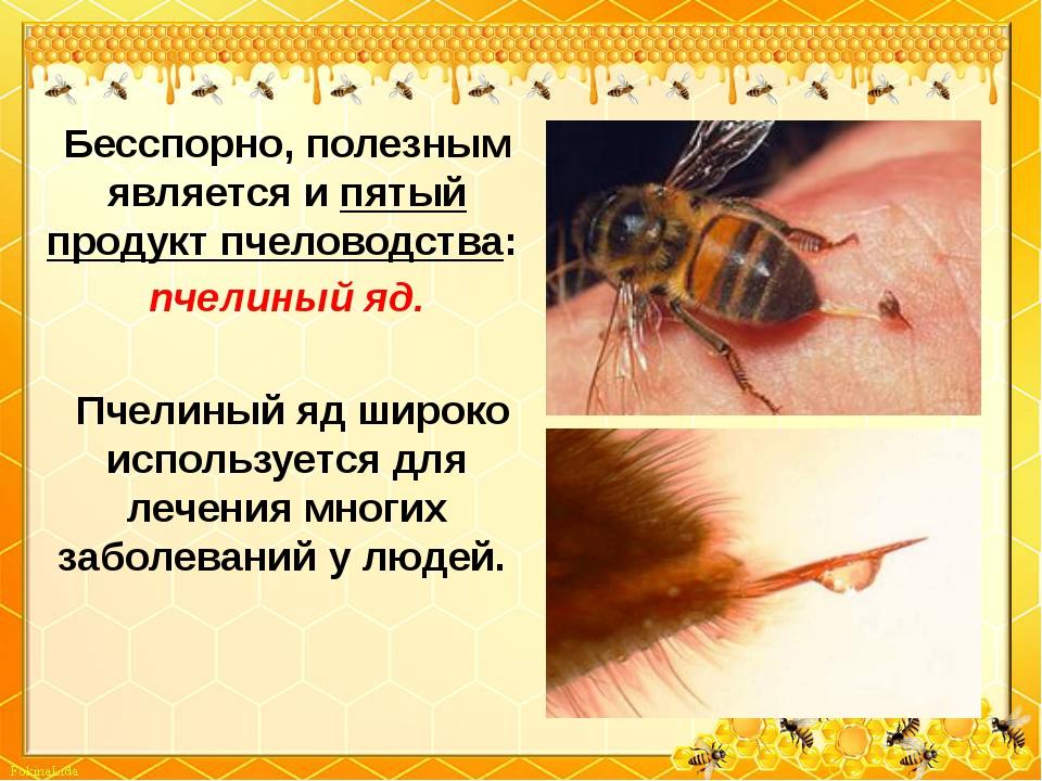 Бесспорно, полезным является и пятый продукт пчеловодства: пчелиный яд. Пчели...